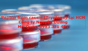 pepton-from-casein-1-0983371451